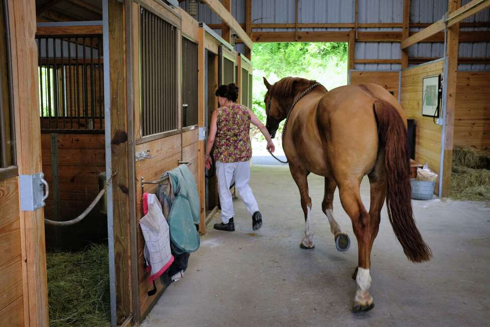 Sue Tanner leads her horse Doc back into his stall inside the barn on her property on Wednesday, July 10, 2019, in Chatham, N.Y. (Paul Buckowski/Times Union)