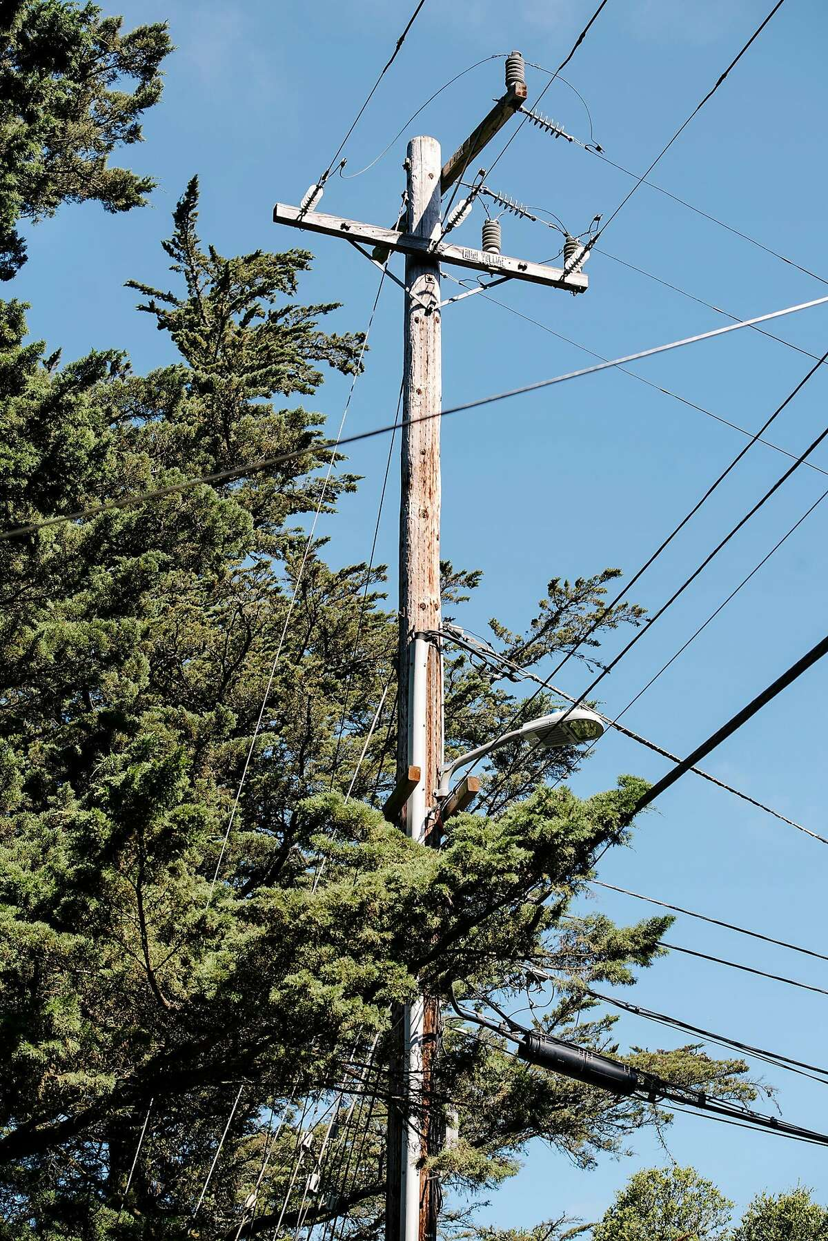 A power pole stands next to trees as work crews from Mowbray's Tree Service, contracted by PG&E to handle vegetation management, prepare to trim back trees along Skyline Blvd. in Oakland, CA on June 26th, 2019.