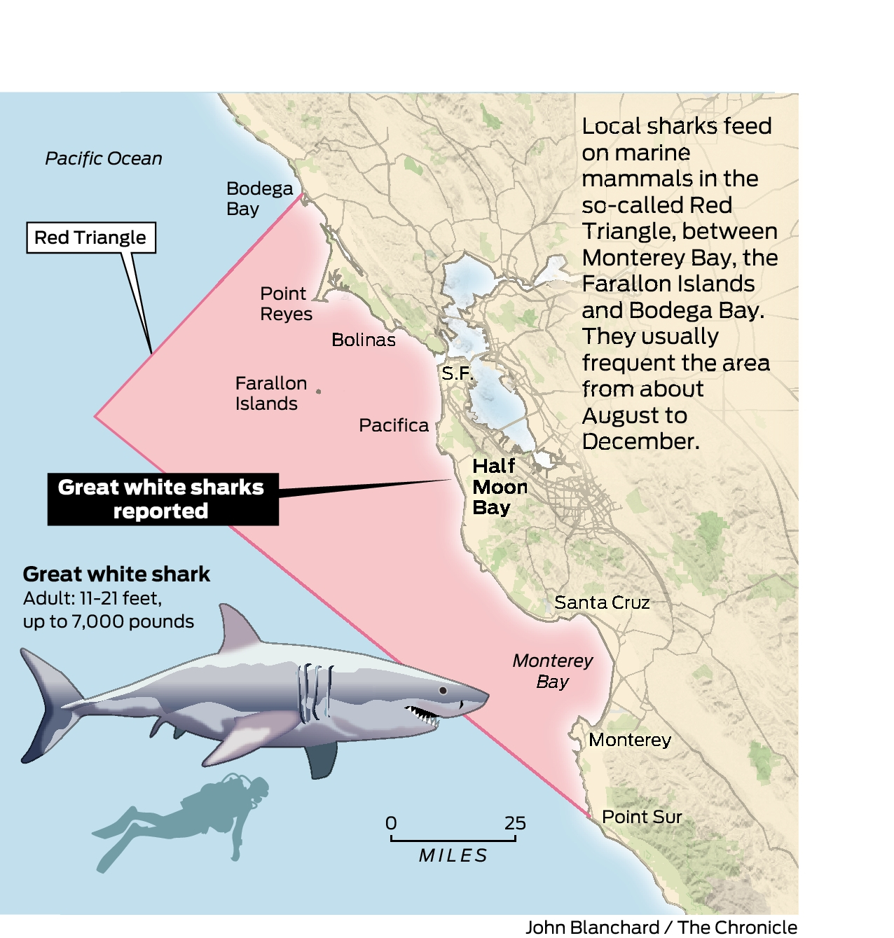 Great white sharks spotted near Half Moon Bay - SFChronicle com