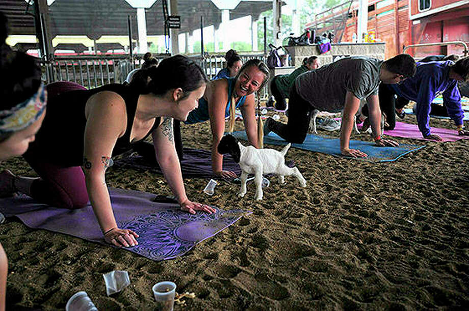 Black Betty, the latest addition to Rachel Thoele's goat herd, was the highlight of a goat yoga event at the Coles County Fairground in Charleston. Photo: Jarad Jarmon | Times-Courier (AP)