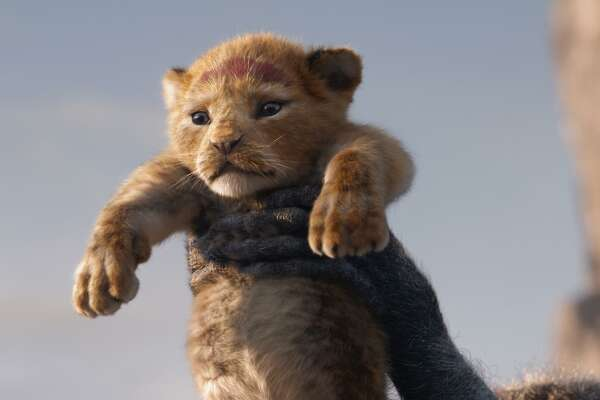 "The lion Simba, voiced as a cub by JD McCrary, is rendered with cuddly verisimilitude in Disney's CGI remake of ""The Lion King."" MUST CREDIT: Walt Disney Studios Motion Pictures"
