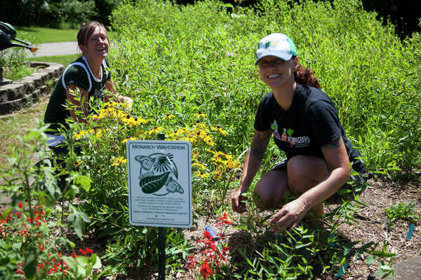Sally Kirbach (left) and Christine Favilla (right) tend to the butterfly garden at Hellrung Park in Alton during the 3rd Annual Community Gathering
