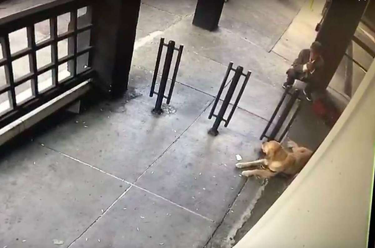 An owner was reunited with her dog after a man was captured on surveillance video untying the dog's leash from a pole outside a market in Japantown.
