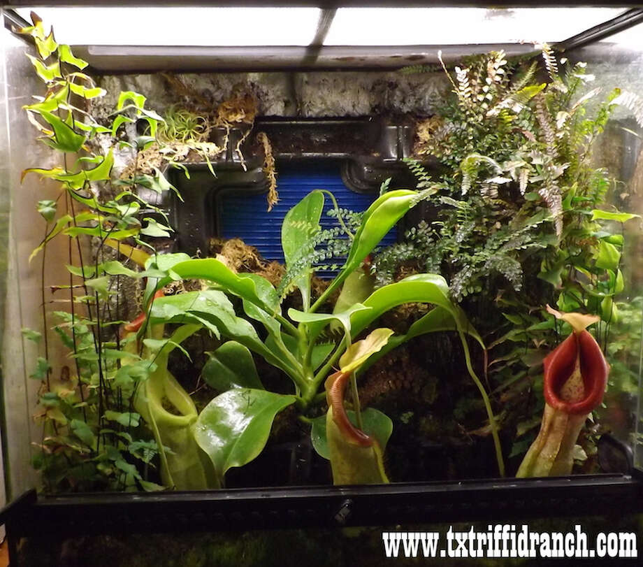 Many of the enclosures include a variety of plants that are curated to fit a requested theme, usually connected to a horror film or piece of literature. Photo: Picasa, Texas Triffid Ranch /