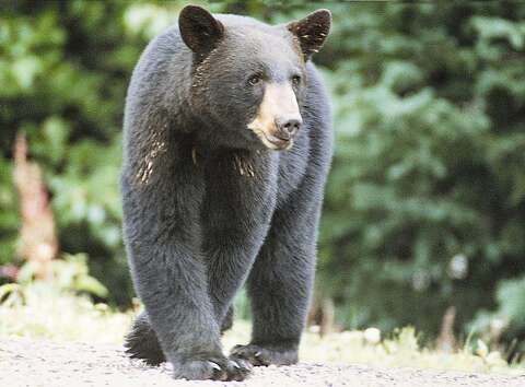 Jerry Walls: A hair-raising experience with two black bears
