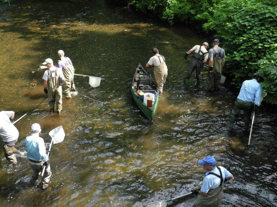 Members of Trout Unlimited and state DEEP employees fan out in the Norwalk River in Wilton, Conn., in search of fish to count on July 12, 2019. Photo: Jeannette Ross / Hearst Connecticut Media / Wilton Bulletin