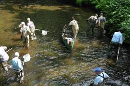 Members of Trout Unlimited and state DEEP employees fan out in the Norwalk River in Wilton, Conn., in search of fish to count on July 12, 2019.