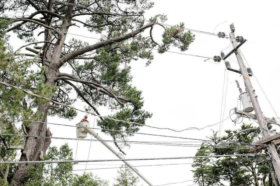 Pacific Gas and Electric Co. could be forced to hire its own tree-trimming workforce under a judge's plan. Photo: Photos By Michael Short / Special To The Chronicle 2019