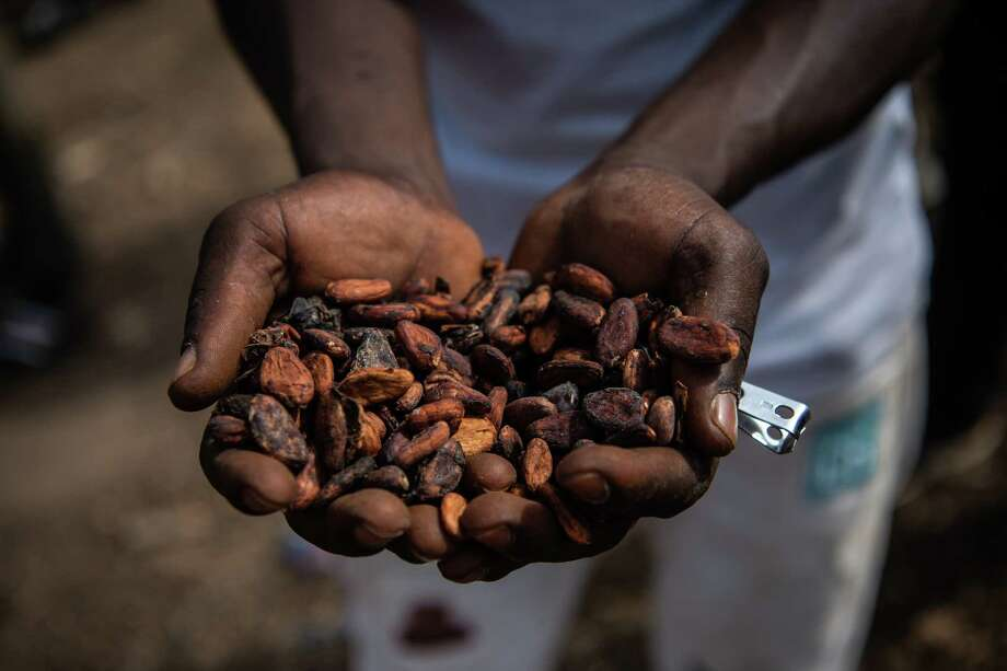A worker holds dried cocoa beans outside a cooperative facility in the village of Gloplou, Côte d'Ivoire. Photo: Washington Post Photo By Salwan Georges. / The Washington Post