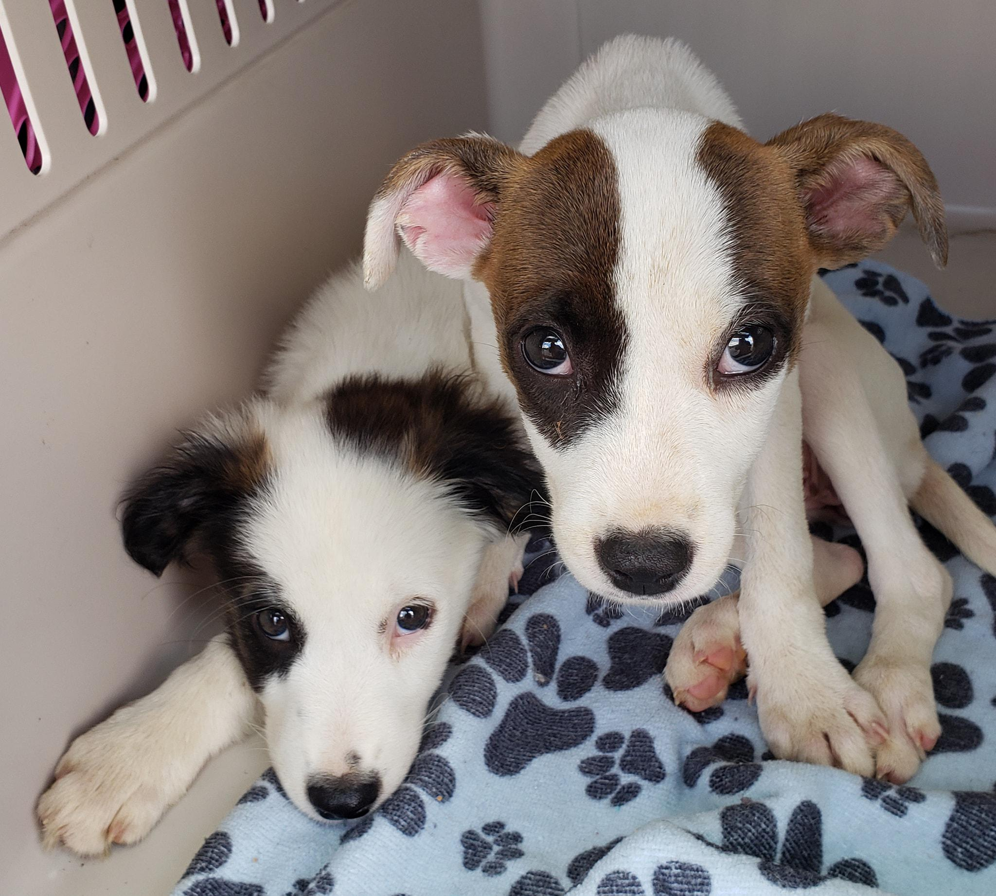Animal rescue group probed after puppies become sick - NewsTimes