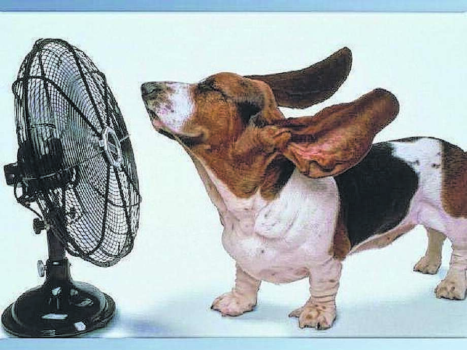 Remember it's not just people who are affected by high heat and humidity; keep Fluffy and Fido inside, too.