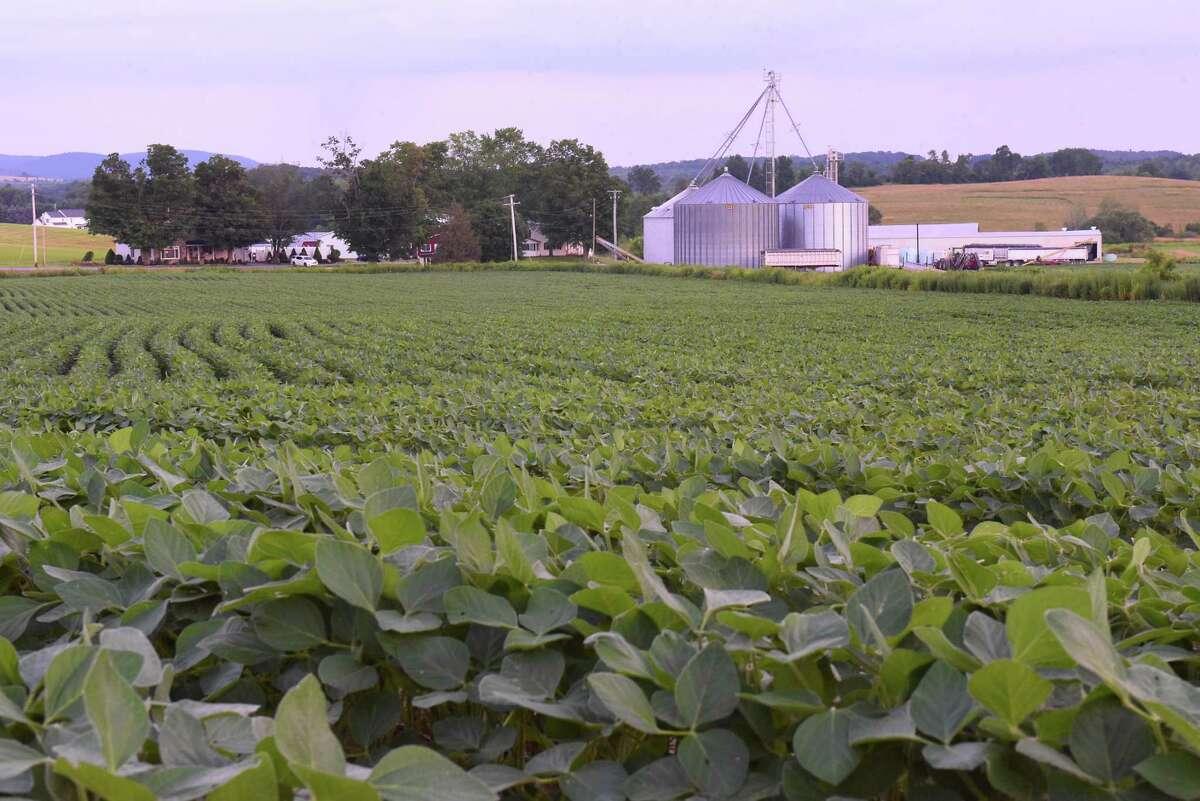 Soybean plants grow in a field on Hewitt Farms on Rt. 278 on Tuesday, July 16, 2019 in Brunswick, N.Y. (Lori Van Buren/Times Union)