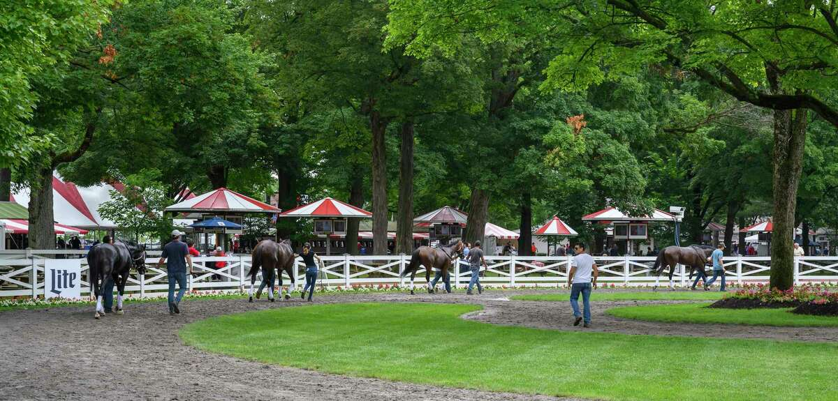 Horses school in the paddock to get them used to the surroundings at the Saratoga Race Course Wednesday July 17 2019 in Saratoga Springs, N.Y. Special to the Times Union by Skip Dickstein