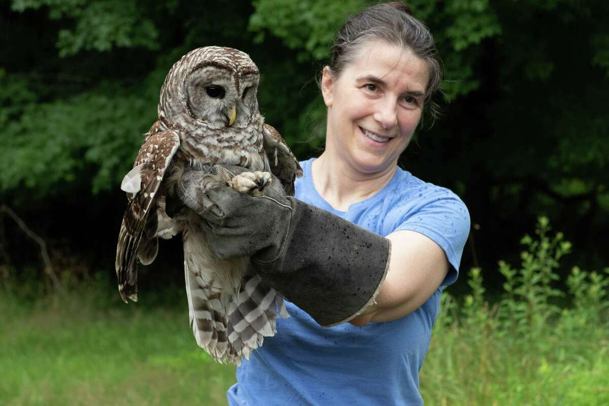 Dara Reid of Wildlife in Crisis holds one of two barred owls released back to nature during a celebration of open space land conservation at the Belknap estate in Weston/Wilton.