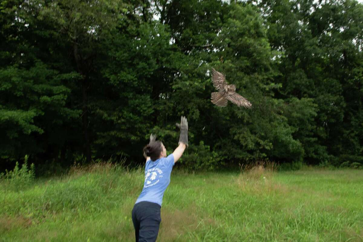 Dara Reid of Wildlife in Crisis releases an owl at the Belknap estate after it was nursed back to health after being injured in a car accident.