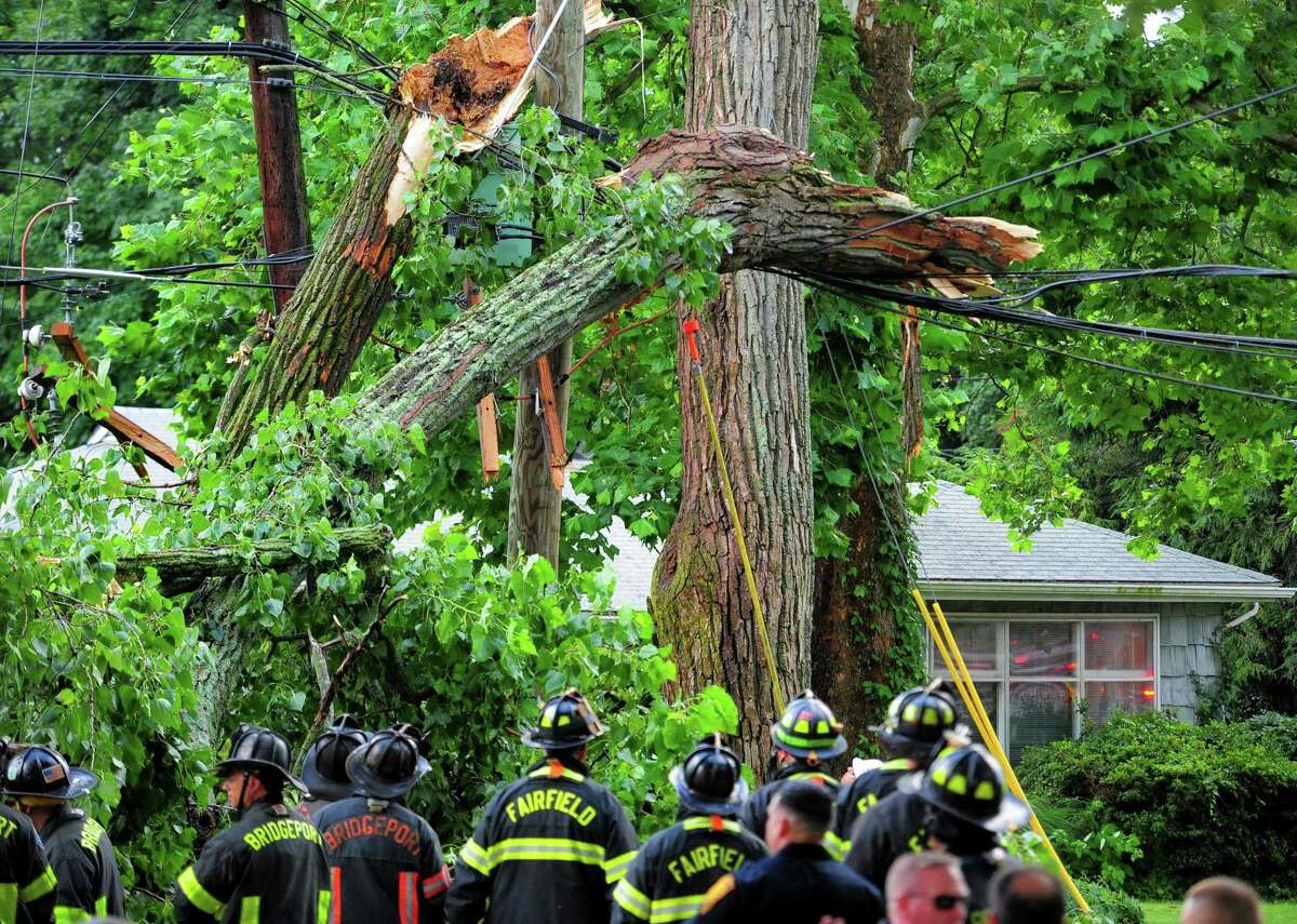 A view of a tree which fell on vehicle along Park Ave Bridgeport, Conn., on Wednesday July 17, 2019. Due to live wires that fell, Bridgeport and Fairfield firefighters had to wait as long as an hour before they could remove the victim who was trapped inside.