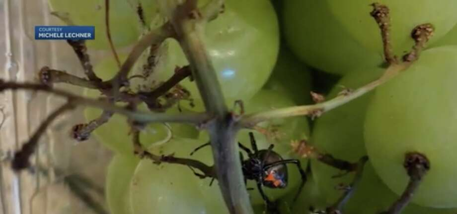 Woman Finds Black Widow Spider In Organic Grapes San