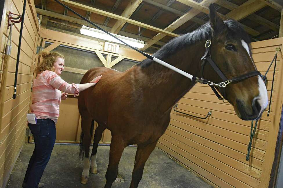 Leigh Hornbeck brushes Cedar as she takes a horseback riding class at Skidmore riding stables on Friday, June 14, 2019 in Saratoga Springs, N.Y. (Lori Van Buren/Times Union)