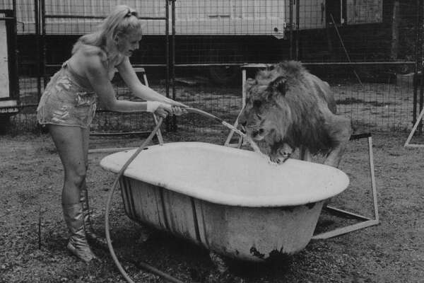 """Lake George, New York - Lion tamer Harriet Beatty, daughter of famed Clyde Beatty, gives one of the beasts she works with a cooling drink during a record breaking wave in the Adirondack Mountains during the Labor Day weekend. Miss Beatty is appearing at """"Storytown, USA,"""" located at this resort village. September 02, 1969 (Times Union Archive)"""