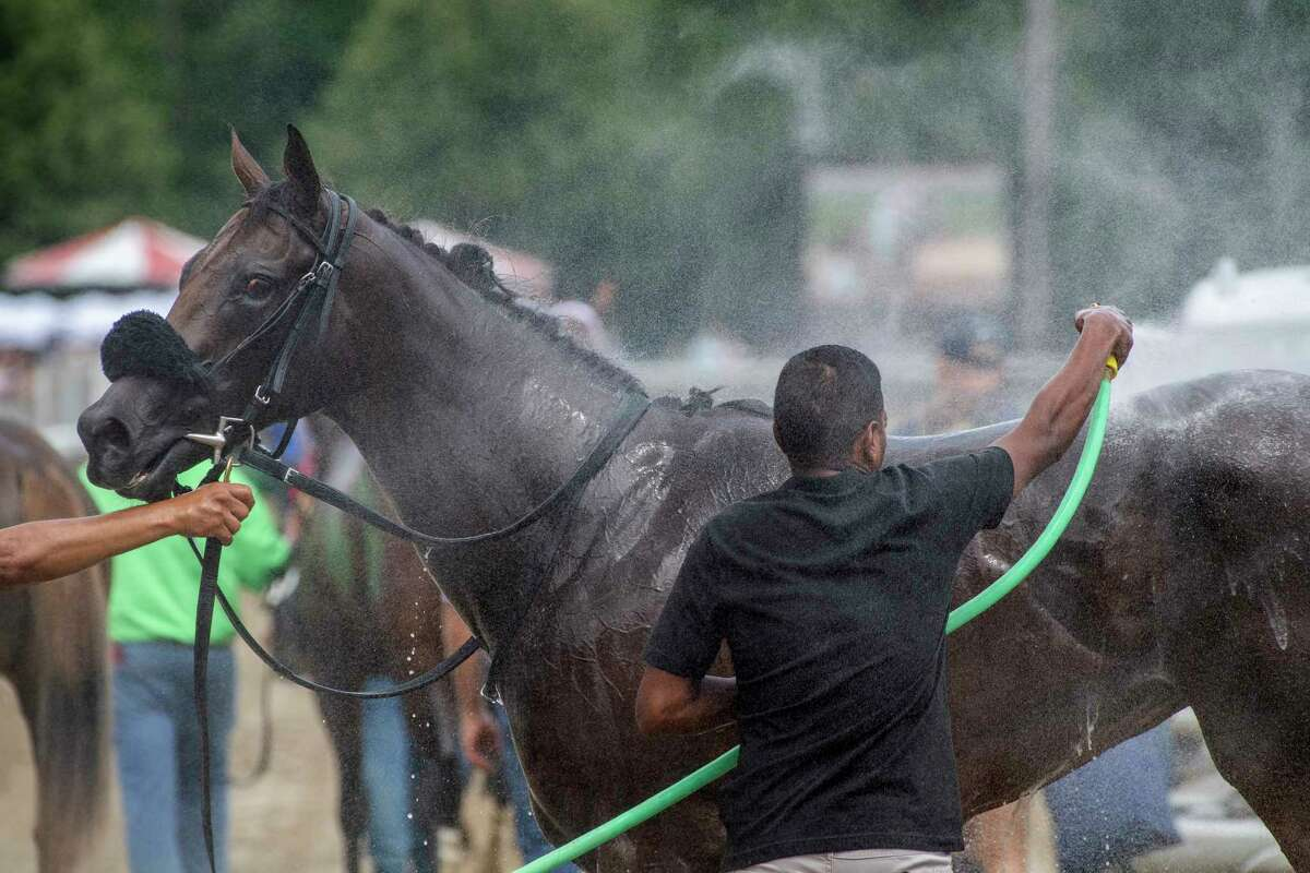 My Italian Rabbi winner of the 6th running of The Stillwater gets a cooling bath of water after the race at the Saratoga Race Course Thursday July 18 2019 in Saratoga Springs, N.Y. Special to the Times Union by Skip Dickstein