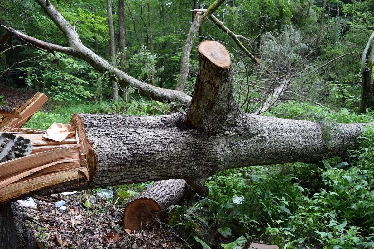 """The """"Door Tree"""" in Hamden's Mount Carmel woods after being vandalized."""