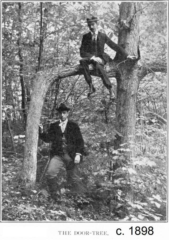 """The """"Door Tree"""" in Hamden's Mount Carmel woods Photo: Contributed Photo"""