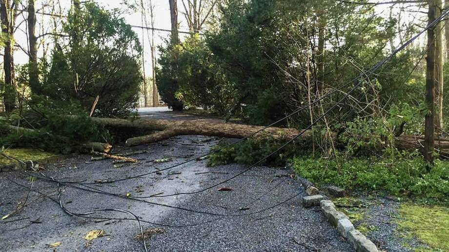 At least seven trees fell in Greenwich during heavy rainstorms late Wednesday and early Thursday, according to police. Photo: Greenwich Police Department Facebook Page