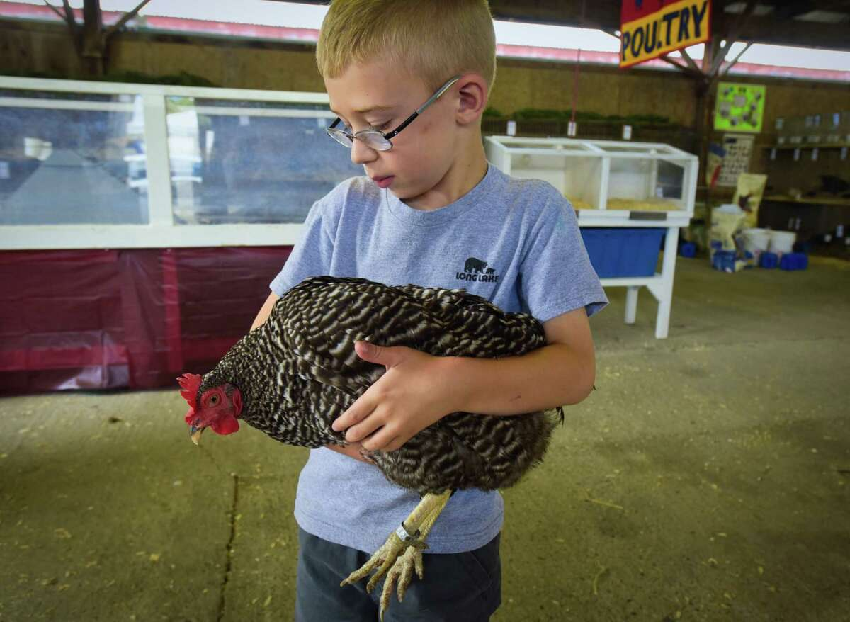 Brayden Perkins, 6, of Greenwich holds his chicken named Handsanitizer, as he prepared to place her into her cage in the poultry barn at the Washington County Fair on Monday, Aug. 20, 2018, in Greenwich, N.Y. Perkins will show the chicken as part of 4-H on Tuesday and then compete in showmanship with the bird on Wednesday. The fair runs through Sunday, Aug. 26th. (Paul Buckowski/Times Union)