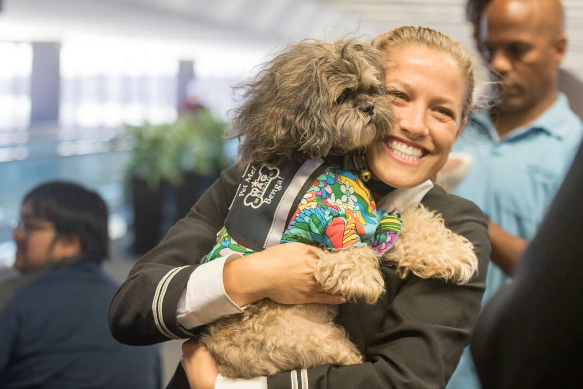 An airline employee holds Benga!, a dog that is part of the Wag Brigade, at SFO airport on July 17, 2019.