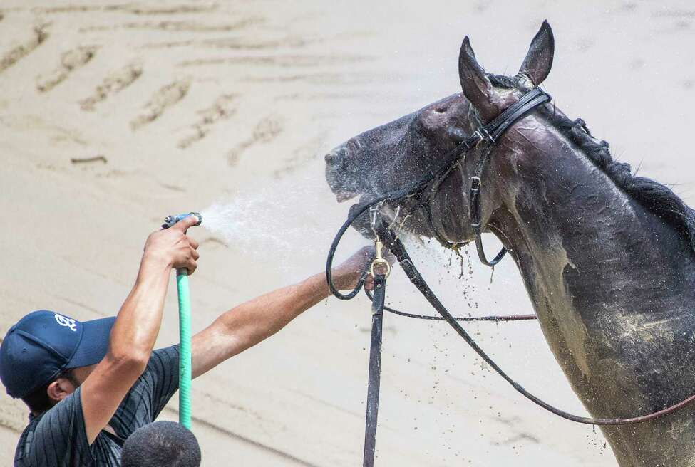 Legion Storm gets a cooling spray of water after the first race at the Saratoga Race Course Friday July 20, 2019 in Saratoga Springs, N.Y. Special to the Times Union by Skip Dickstein