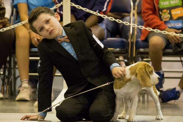 Gideon Towell, 11, of Oklahoma City, waits for his turn to show Carley at the Houston World Series of Dog Show at NRG Center on Friday, July 19, 2019, in Houston.