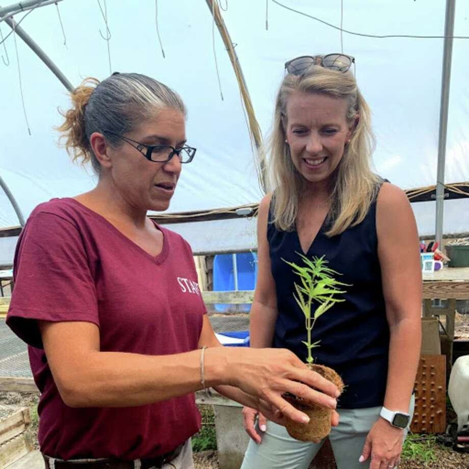 Hennepplanten worden gekweekt in de kassen van Running Brook Farms in Killingworth en (l-r) Site Manager Becky Goetsch toont een plant voor Sen. Christine Cohen, D-Guilford, Foto: Sarah Page Kyrcz