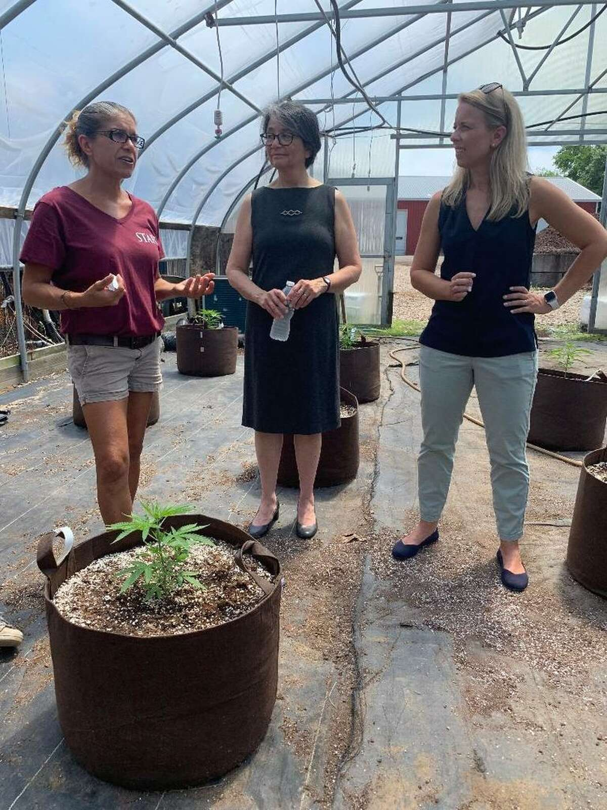 Hemp farming at Killingworth's Running Brook Farms is underway as (l-r) Site Manager Becky Goetsch explains to Killingworth First Selectman Catherine Iino and Sen. Christine Cohen, D-Guilford.