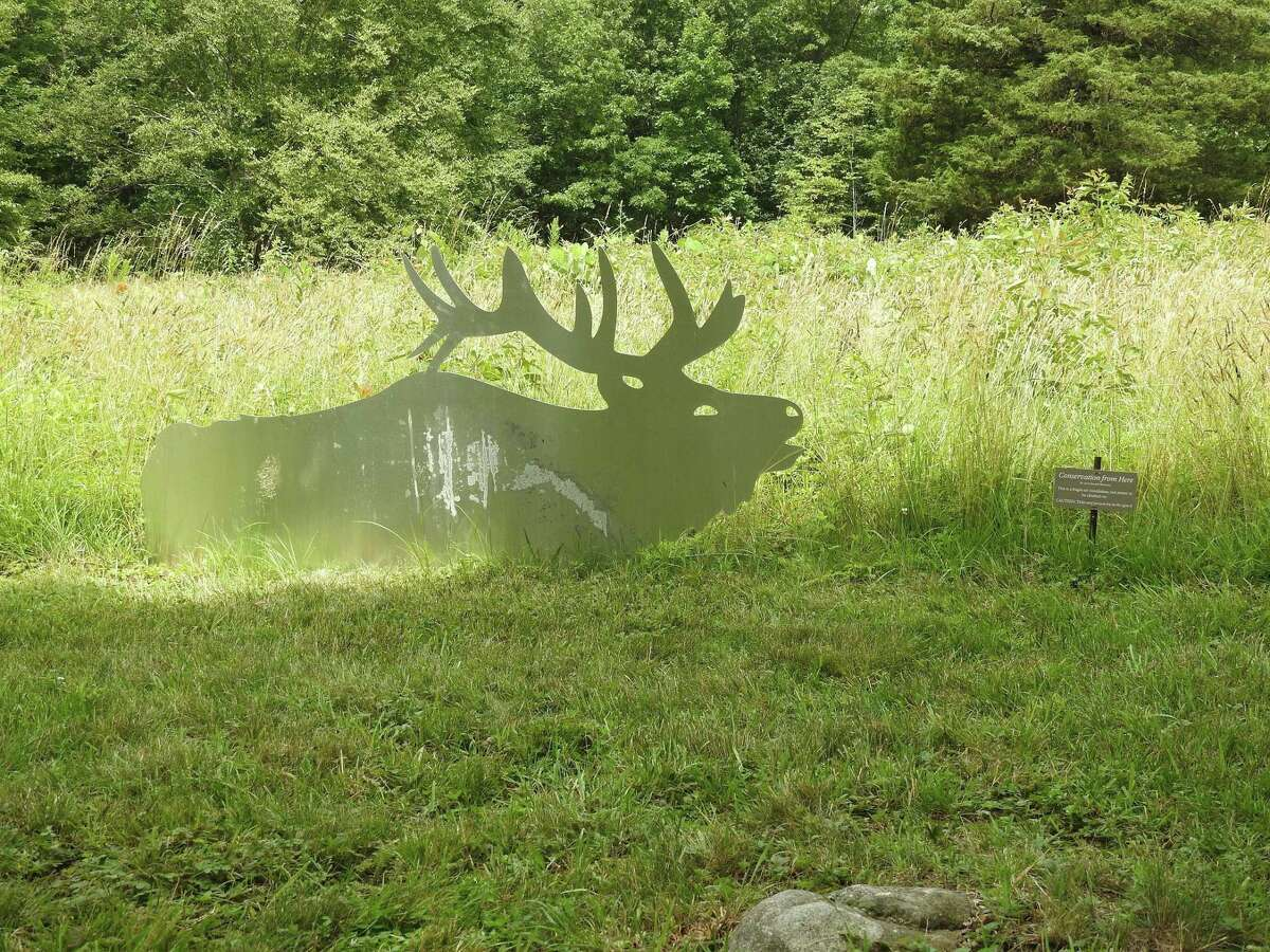 A bull male elk is one of 28 aluminum Roosevelt elks on display at Weir Farm.