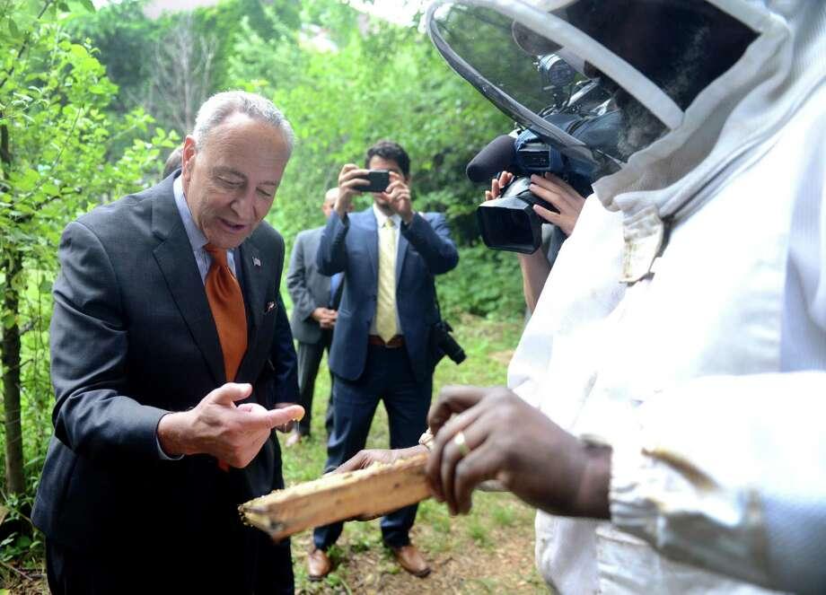 Churchill: Stung by Al Franken, Schumer talks bees in Albany