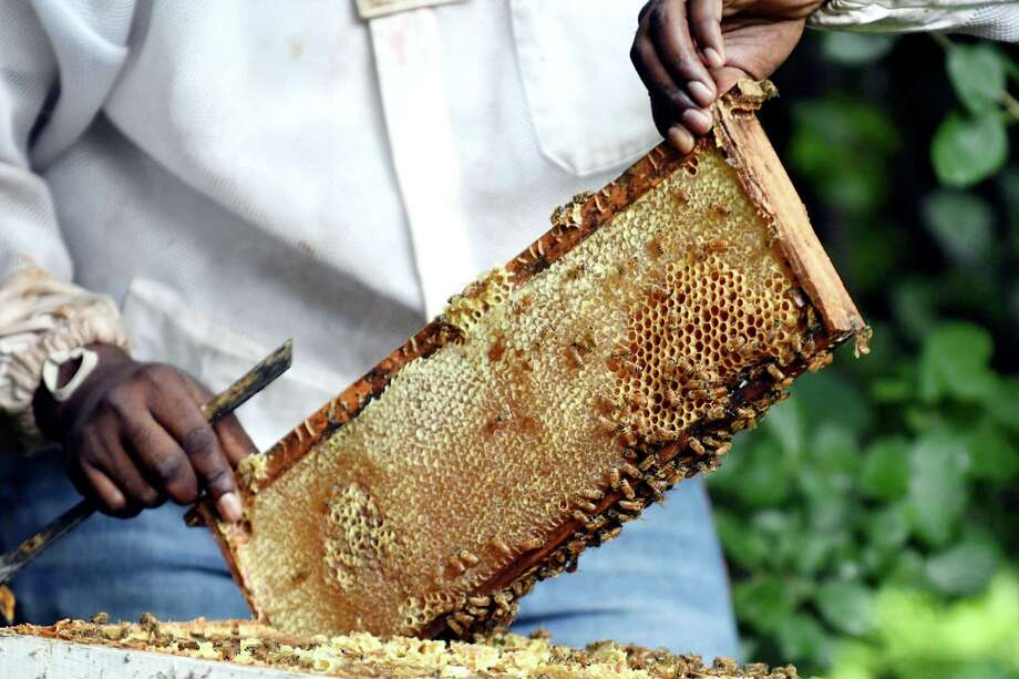 Graig Moore, beekeeper at Radix Ecological Sustainability Center, scrap honey from a beehive on Monday, July 22, 2019, in Albany, N.Y. (Catherine Rafferty/Times Union) Photo: Catherine Rafferty, Albany Times Union / 40047511A