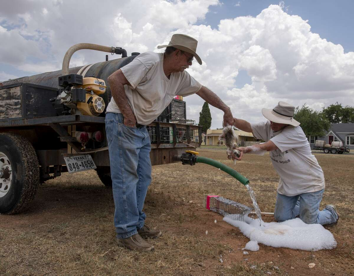 >>>Check out how some individuals have helped with the prairie dog problem in Midland, Texas.