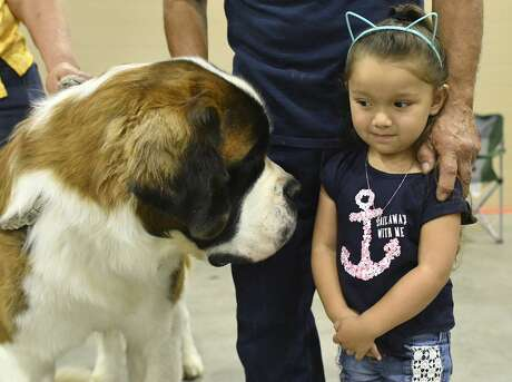 Gemma Rodriguez, 3, encounters a St. Bernard called Coupe'r during the River City Cluster Of Dog Shows at the the Exposition Hall of Freeman Coliseum on Saturday, July 13, 2019. The event continues through Sunday. Clubs represented include the Bexar County Kennel Club and the Kennel Club of Greater Victoria.