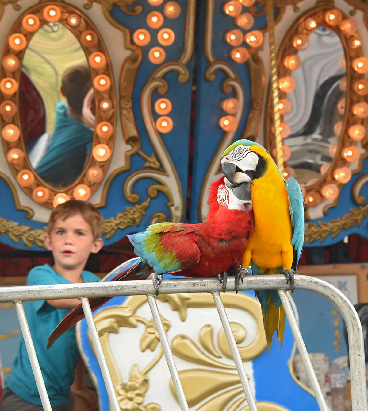 A boy riding the merry-go-round looks at a couple parrots sitting on a fence at the Saratoga County Fair on Wednesday, July 25, 2018 in Ballston Spa, N.Y. (Lori Van Buren/Times Union)