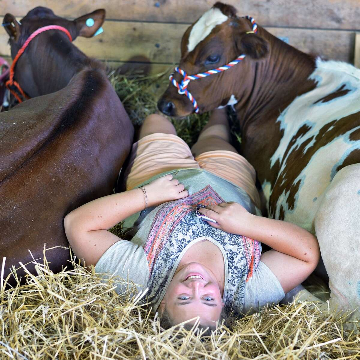 Margaret Brownell of Greenwich with her cows as the Saratoga County Fair begins Tuesday July 21, 2015 in Ballston Spa, NY. (John Carl D'Annibale / Times Union)