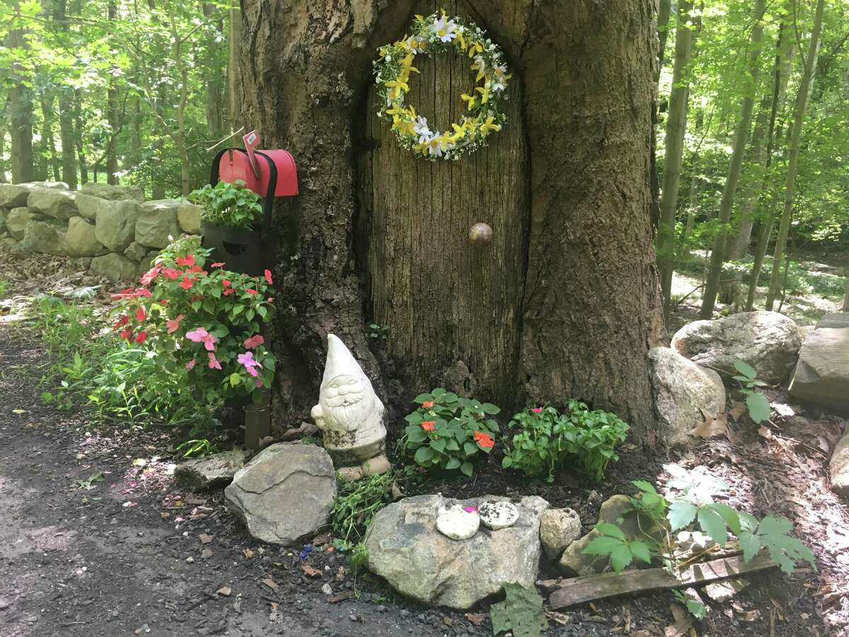 It's not everyday you stumble on Gnomes in the woods of Ridgefield. This family of pixies and fairies have taken up residence in three trees on Spring Valley Road.