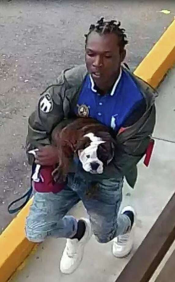 Stolen $2,500 English Bulldog puppy lands man in Houston jail