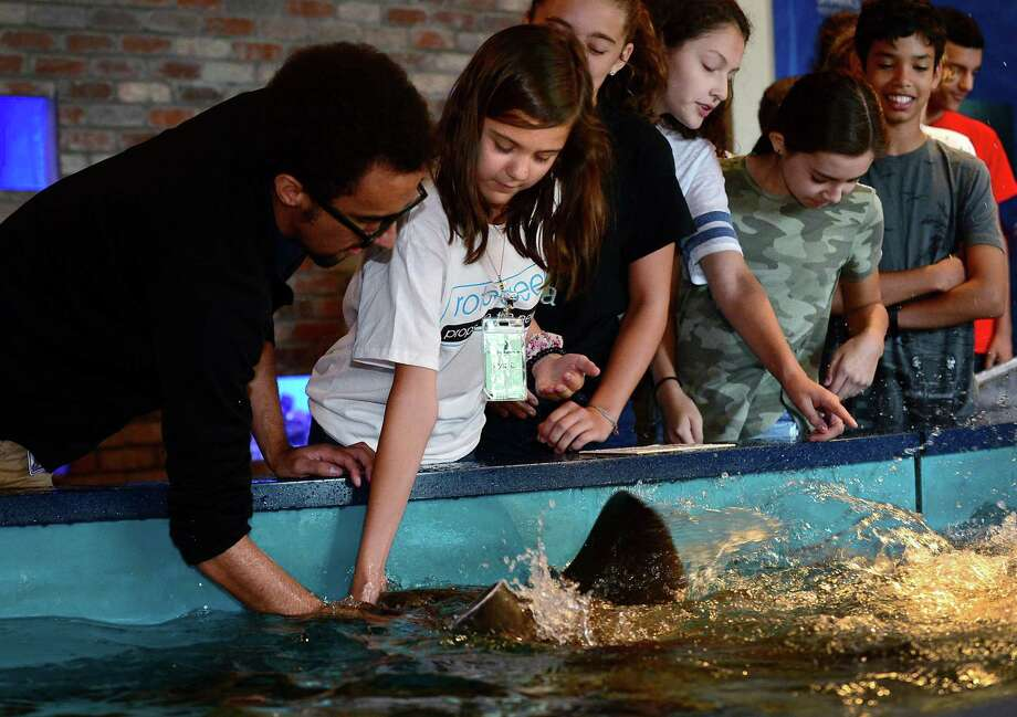 Aquarist Marc Rivera helps summer campers in The Mayor's Student Engineering & Science Program including Ava Levitt, 12, feed the Sting Rays at the Maritime Aquarium Thursday, July 25, 2019, in Norwalk, Conn. The Mayor's Student Engineering & Science Program, created to utilize the resources of The Maritime Aquarium in helping city teens achieve STEM literacy. Each year, 50 rising 8th- and 9th-graders receive a free week of camp at the Aquarium. The program is supported by donations from local businesses and organizations, including Bankwell, First County Bank, Eversource, and King Industries. two groups of 25 Norwalk teens are participating in the Mayor's Student Engineering & Science Program at The Maritime Aquarium. Photo: Erik Trautmann / Hearst Connecticut Media / Norwalk Hour