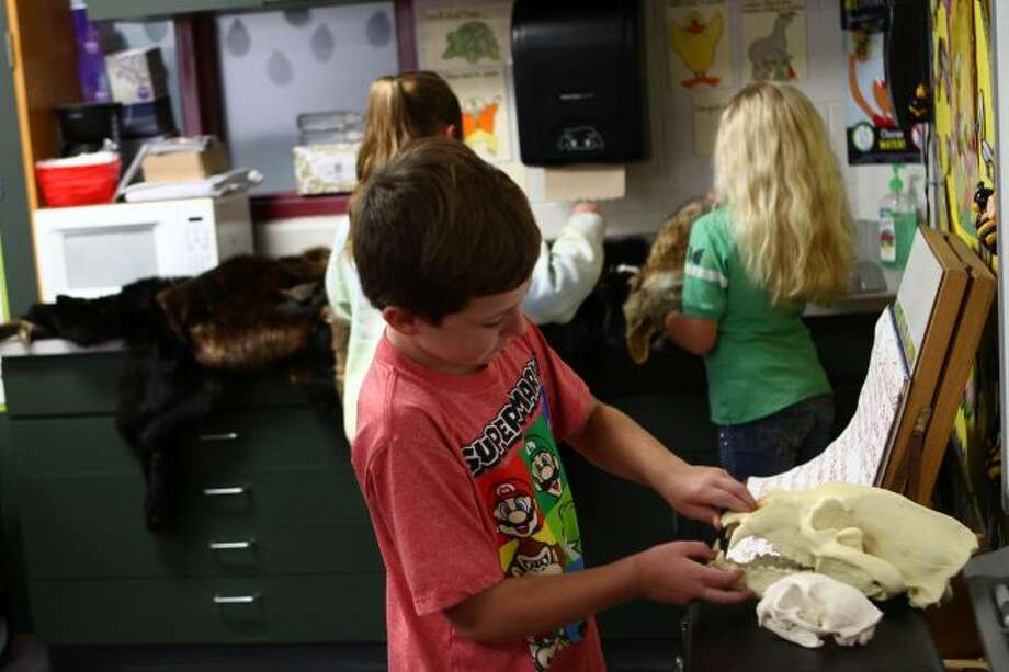 Riverview second-grader Carter Smalley looks at the teeth of a bear skull on Wednesday during a Department of Natural Resources presentation. (Pioneer photos/Meghan Haas)