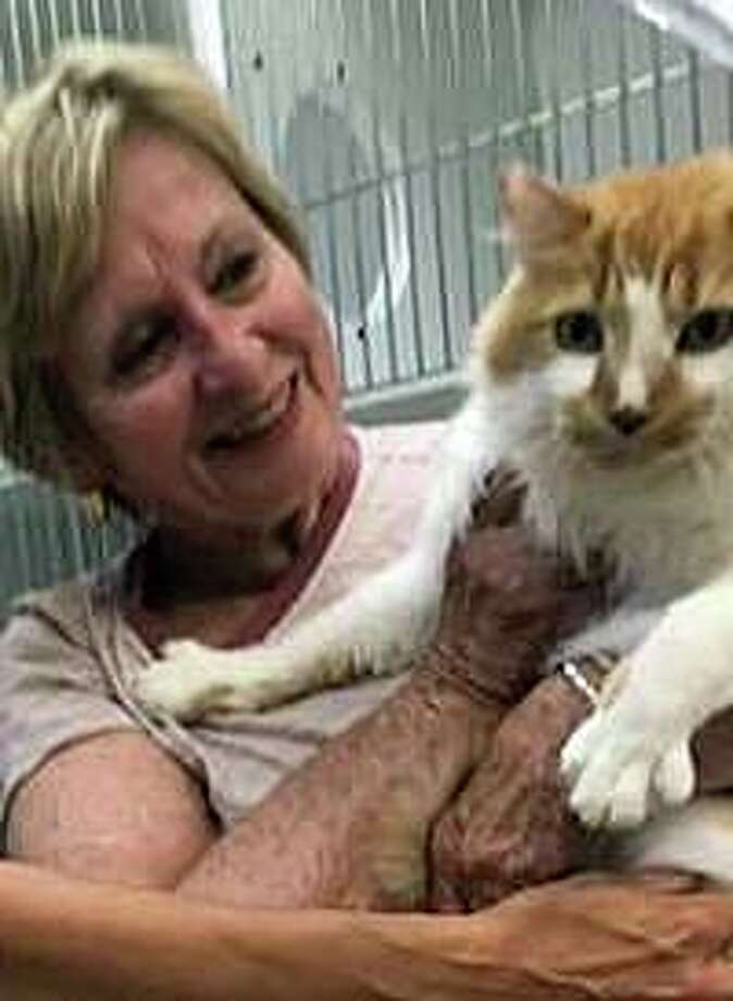 Susan Monnes is reunited with Dooley, a five-year-old orange and white cat, who went missing in Madison as the Monnes family was moving from Florida to the town in 2016. Photo: Madison Animal Control Photo