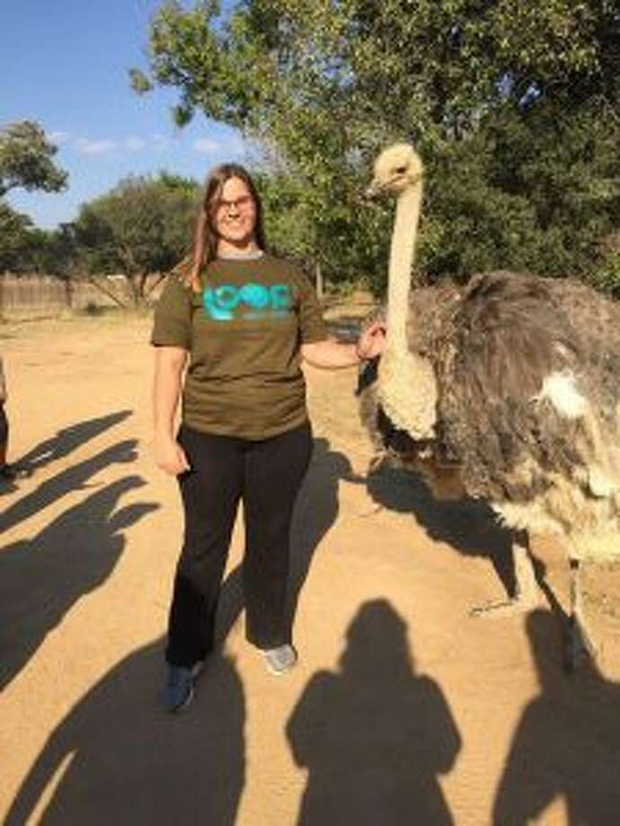 Tiffany Sindel, a Mecosta County resident who studies biology at Alma College, recently returned from a two-week hands-on experience in South Africa, where she learned to work with cheetahs. While the focus of her trip was the big cats, she also had encounters with other exotic animals, such as elephants and the ostrich she is pictured beside. (Courtesy photo)