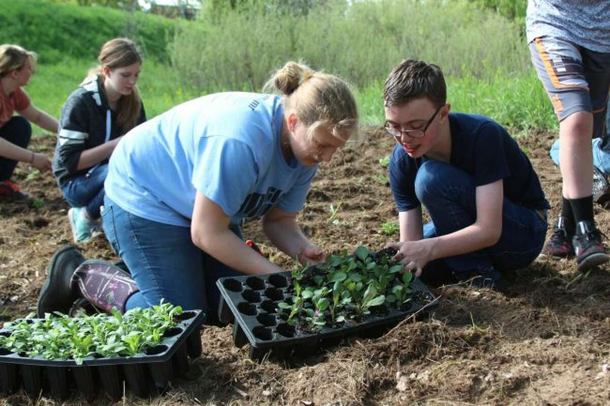 Emma Powell and Mason Dozier work to get a plug from one of the trays as the Reed City Middle School Science Exploration class helped plant 600 pollinating plant plugs Wednesday morning near Westerburg Park. (Pioneer photos/Brandon Fountain)