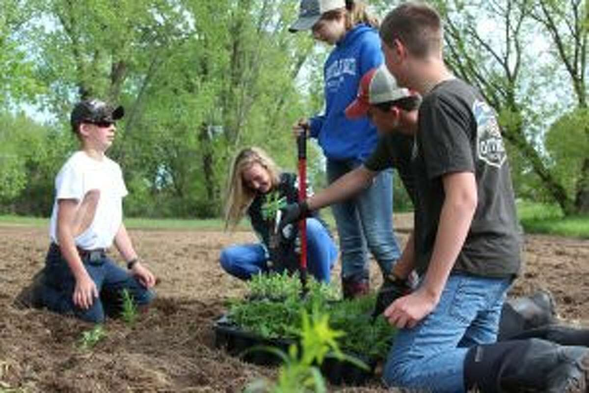 Reed City Middle School students begin planting the plugs in the ground Wednesday morning. More than 600 were planted by the Science Exploration class.