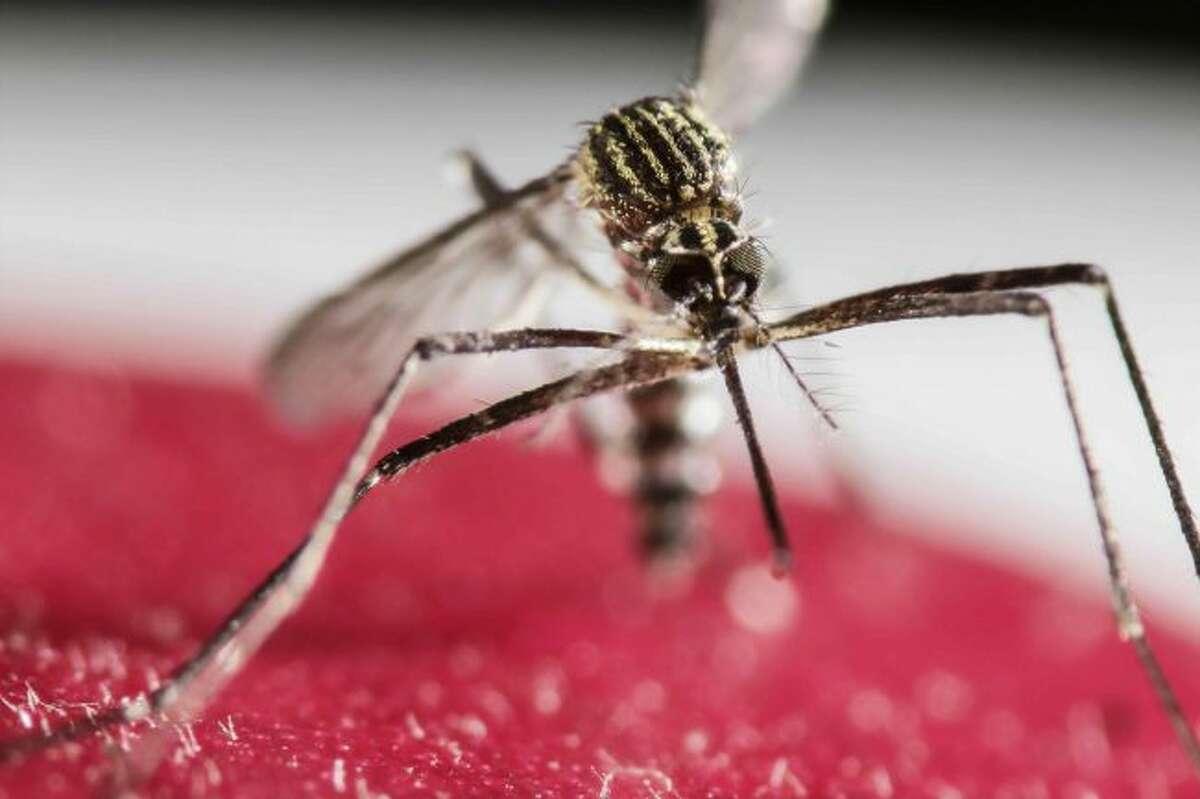 Zika virus can kill brain tumor cells, researchers discover. (Jeffrey Arguedas/EFE/Zuma Press/TNS)