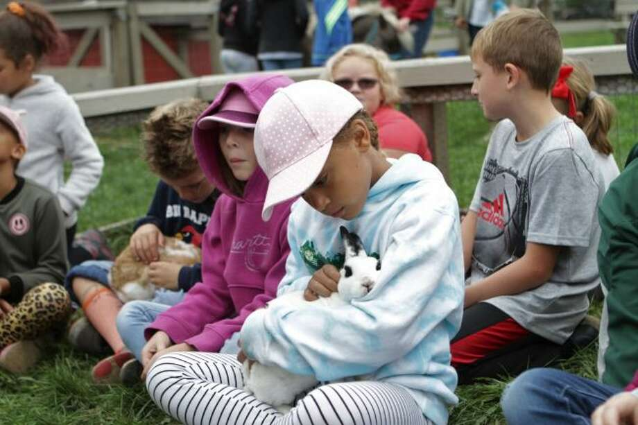 Riverview Elementary students crowded into the rabbit pen to quietly await their turn to hold a bunny at the petting zoo station during Agricultural and Natural Resource Day. Throughout the day, student rotated to different stations across Cran-Hill Ranch to learn about animals and the environment. (Pictured) Adalie Smith carefully holds one of the rabbits before passing it on to a classmate. (Pioneer photo/Meghan Gunther-Haas)